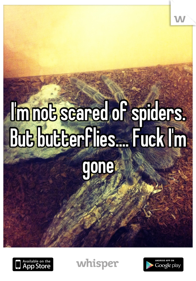 I'm not scared of spiders. But butterflies.... Fuck I'm gone