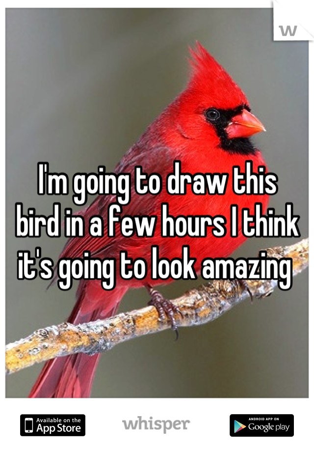 I'm going to draw this  bird in a few hours I think  it's going to look amazing