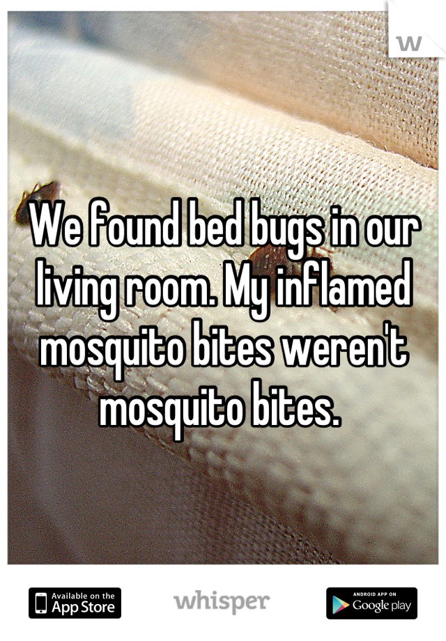 We found bed bugs in our living room. My inflamed mosquito bites weren't mosquito bites.