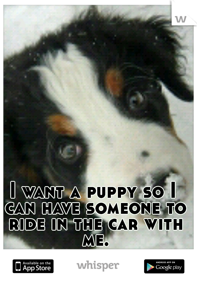 I want a puppy so I can have someone to ride in the car with me.