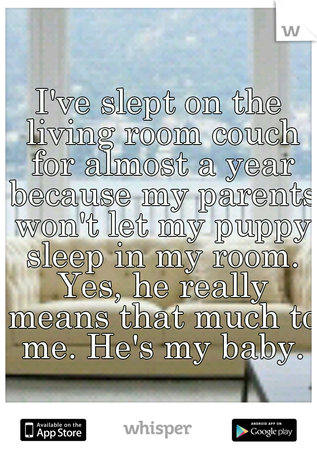 I've slept on the living room couch for almost a year because my parents won't let my puppy sleep in my room. Yes, he really means that much to me. He's my baby.