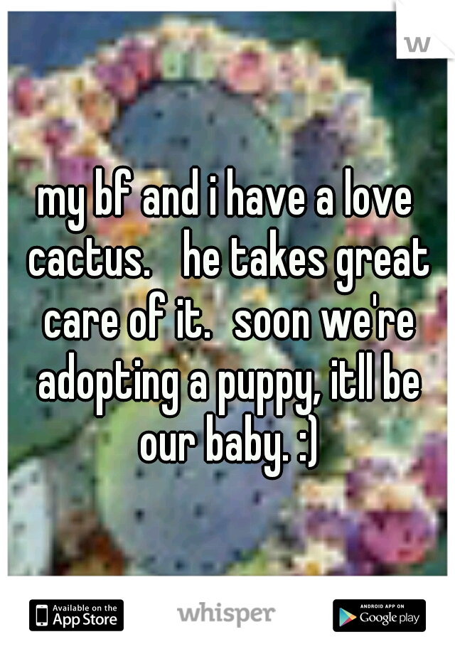 my bf and i have a love cactus.  he takes great care of it. soon we're adopting a puppy, itll be our baby. :)