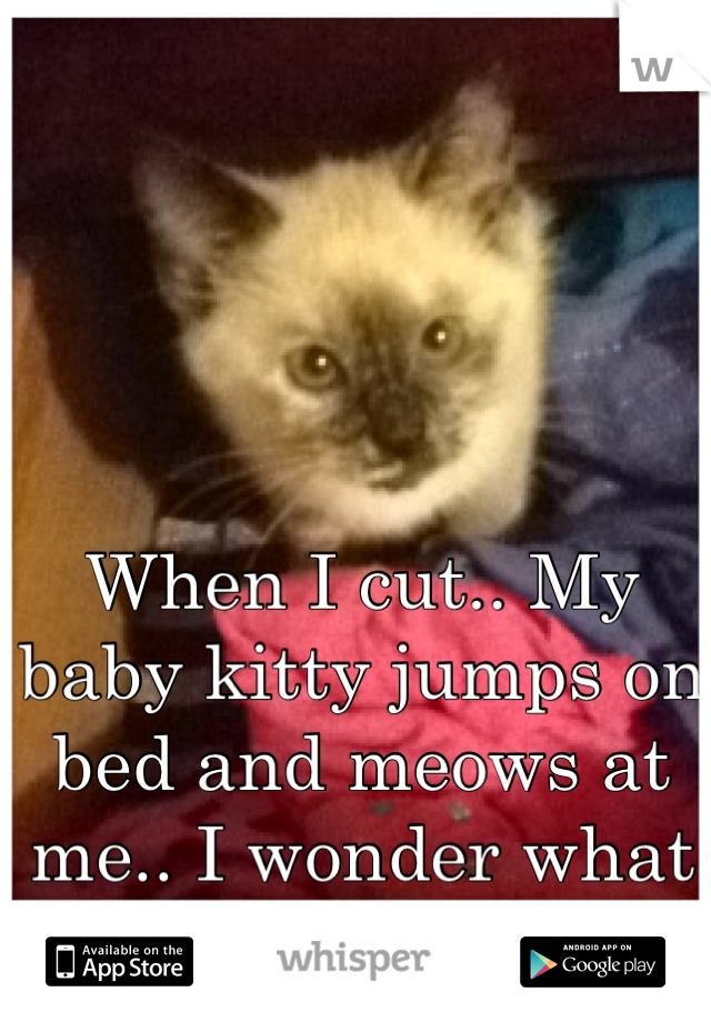 When I cut.. My baby kitty jumps on bed and meows at me.. I wonder what she's saying..