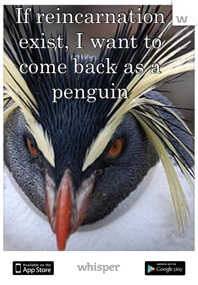 If reincarnation exist, I want to come back as a penguin