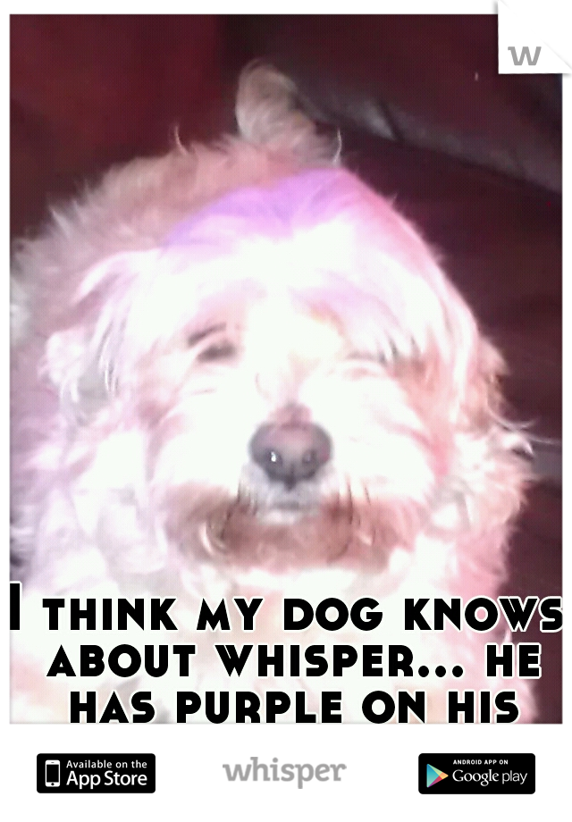 I think my dog knows about whisper... he has purple on his hair.
