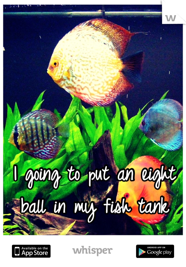I going to put an eight ball in my fish tank