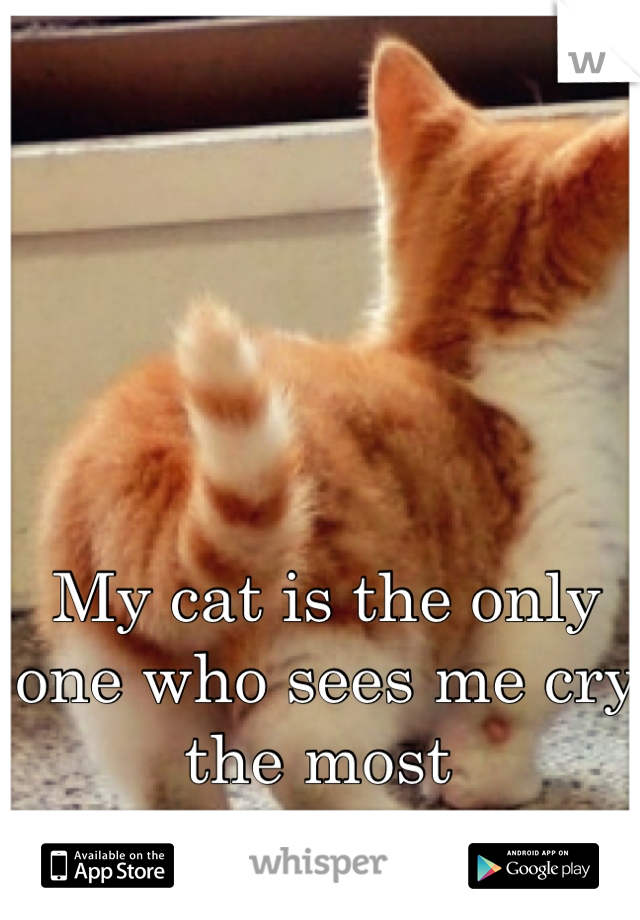My cat is the only one who sees me cry the most