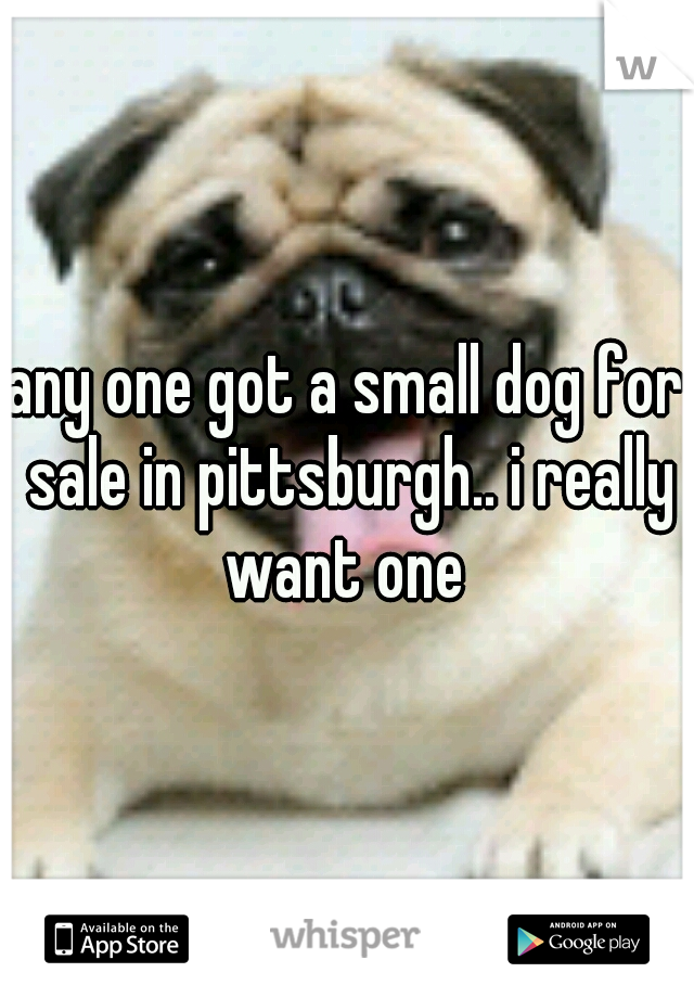 any one got a small dog for sale in pittsburgh.. i really want one