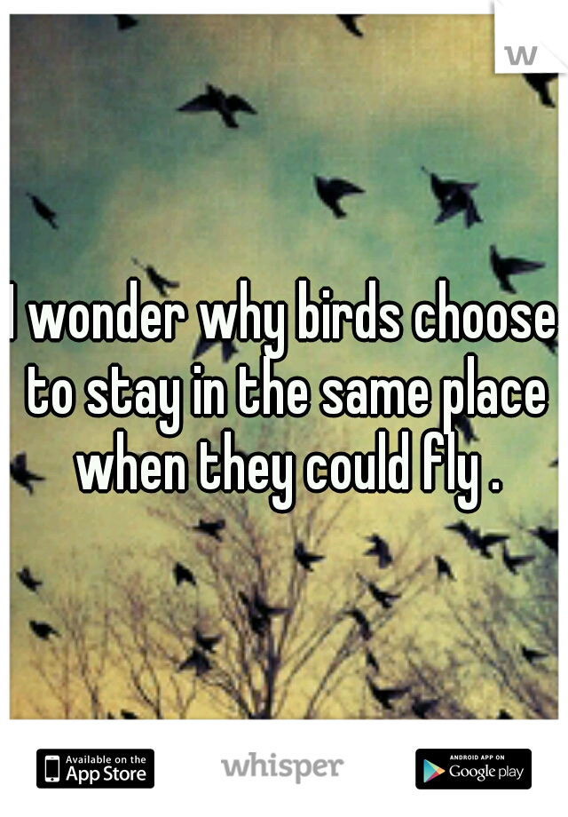 I wonder why birds choose to stay in the same place when they could fly .