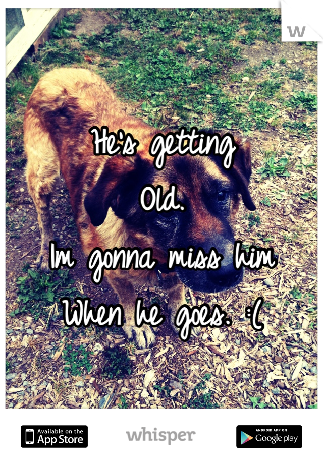 He's getting  Old. Im gonna miss him When he goes. :(
