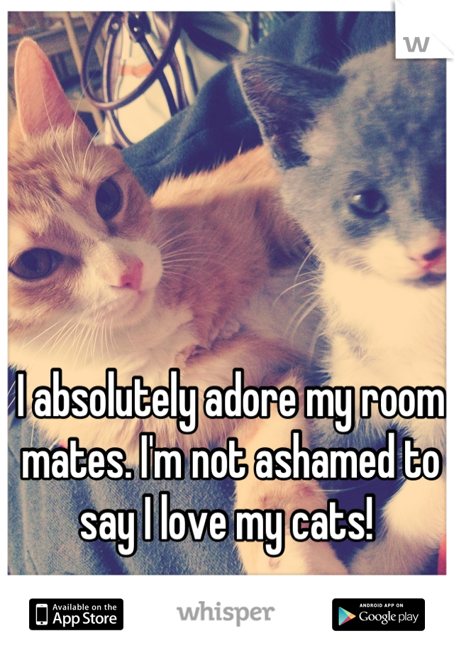 I absolutely adore my room mates. I'm not ashamed to say I love my cats!