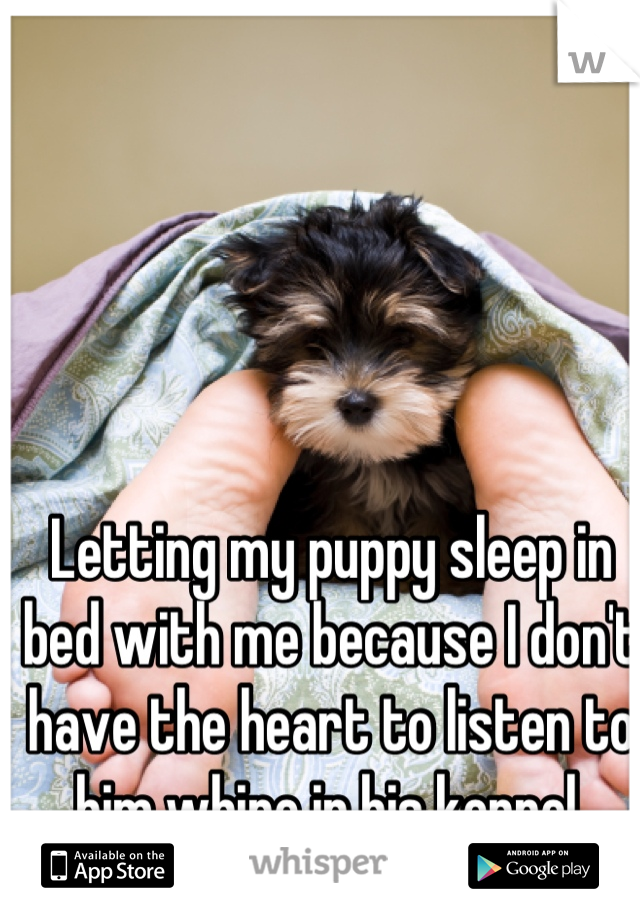 Letting my puppy sleep in bed with me because I don't have the heart to listen to him whine in his kennel.