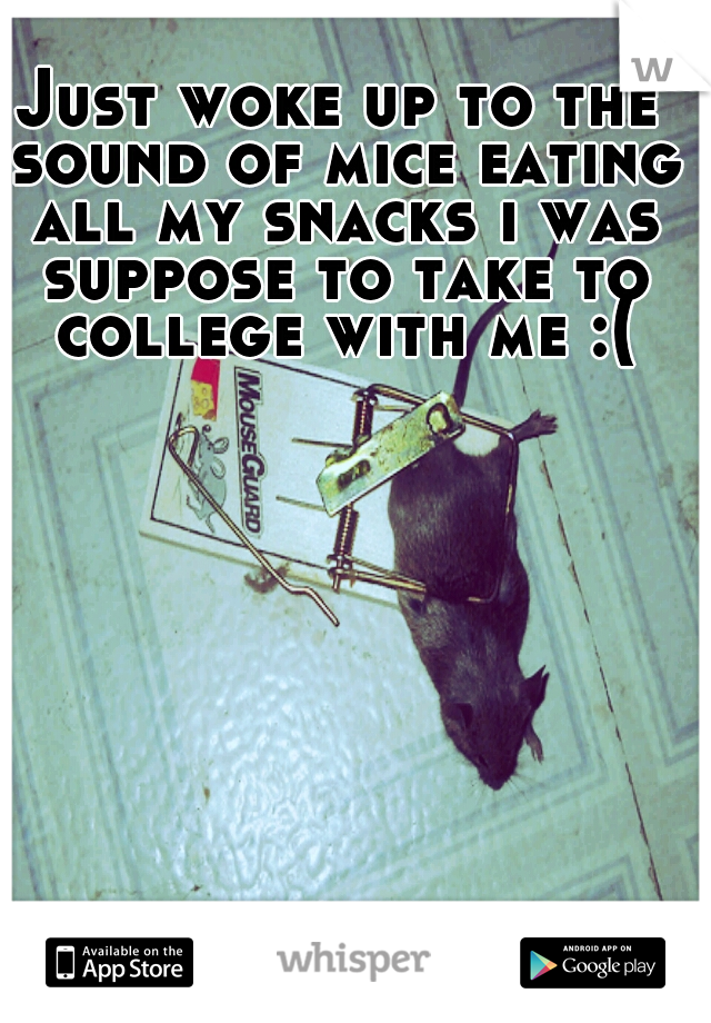 Just woke up to the sound of mice eating all my snacks i was suppose to take to college with me :(