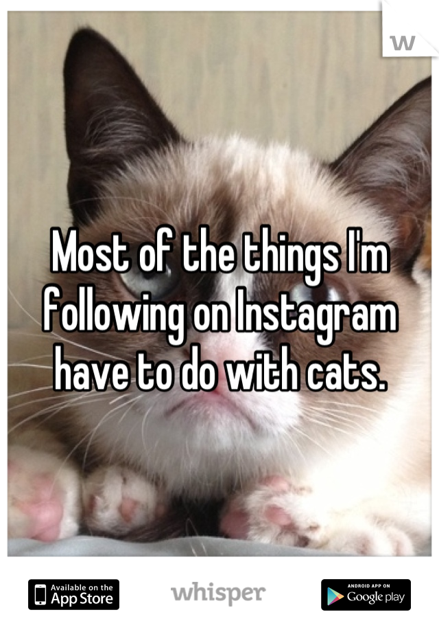 Most of the things I'm following on Instagram have to do with cats.