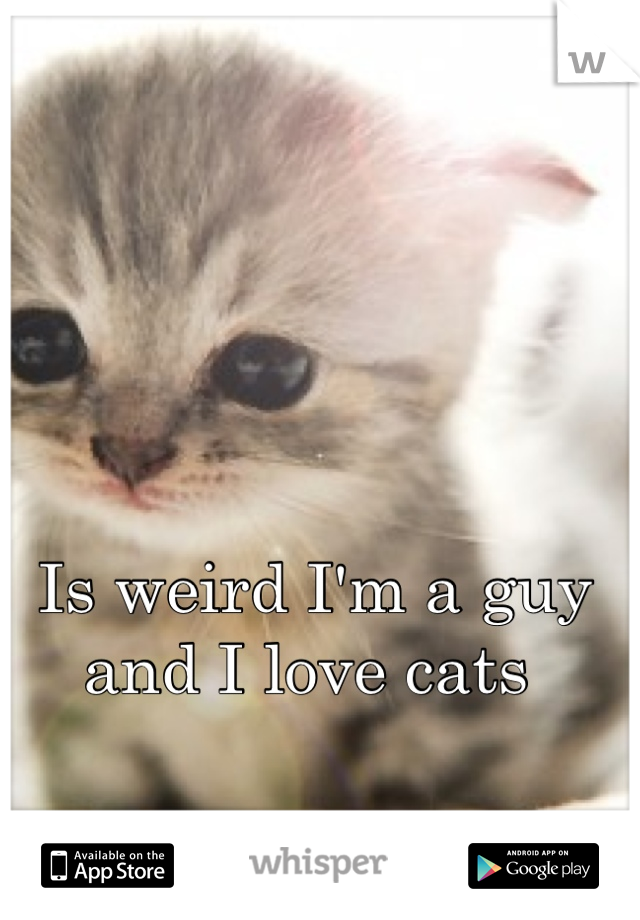 Is weird I'm a guy and I love cats