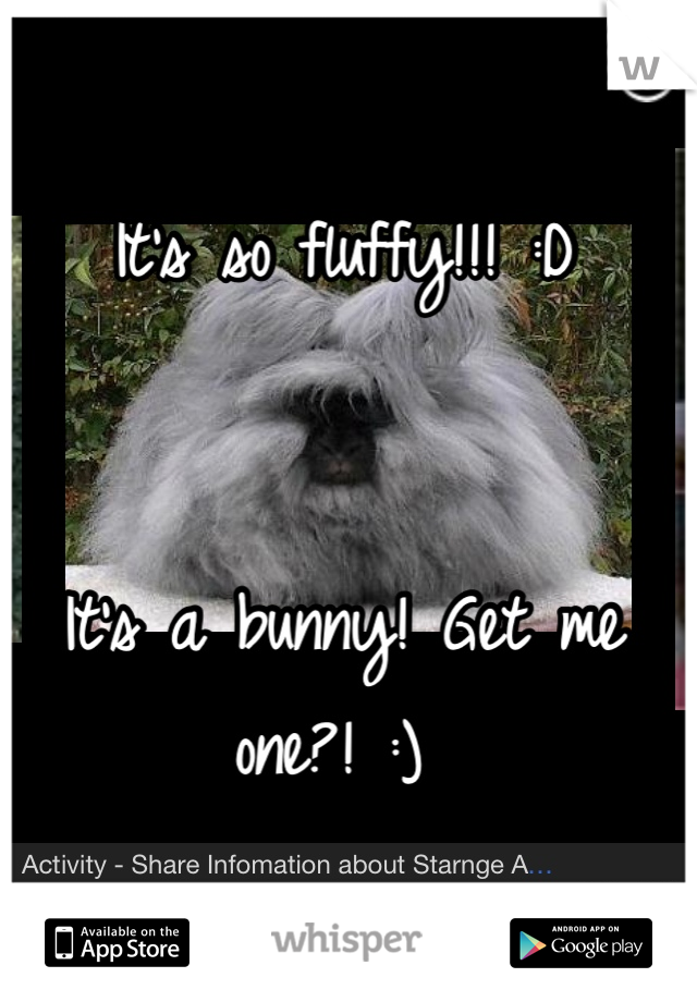 It's so fluffy!!! :D    It's a bunny! Get me one?! :)