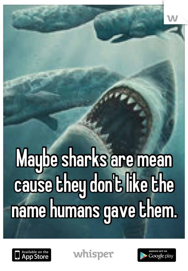 Maybe sharks are mean cause they don't like the name humans gave them.
