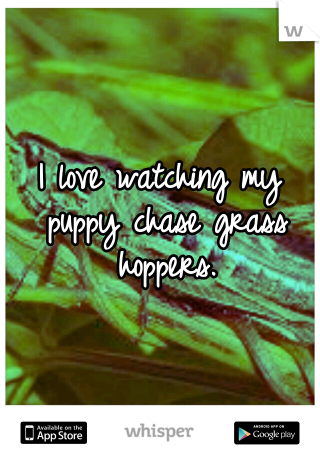 I love watching my puppy chase grass hoppers.