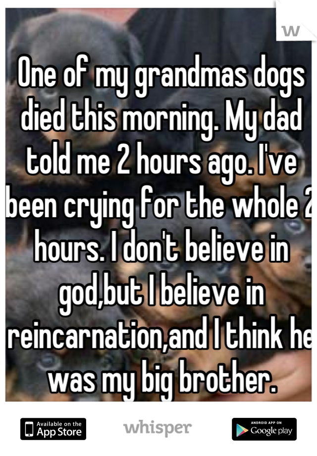 One of my grandmas dogs died this morning. My dad told me 2 hours ago. I've been crying for the whole 2 hours. I don't believe in god,but I believe in reincarnation,and I think he was my big brother.