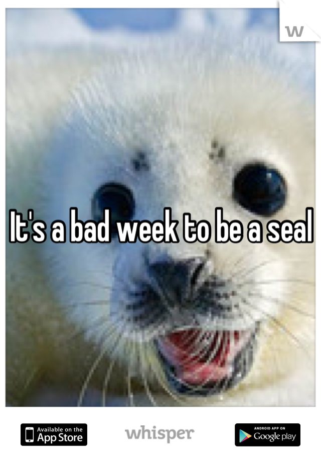 It's a bad week to be a seal