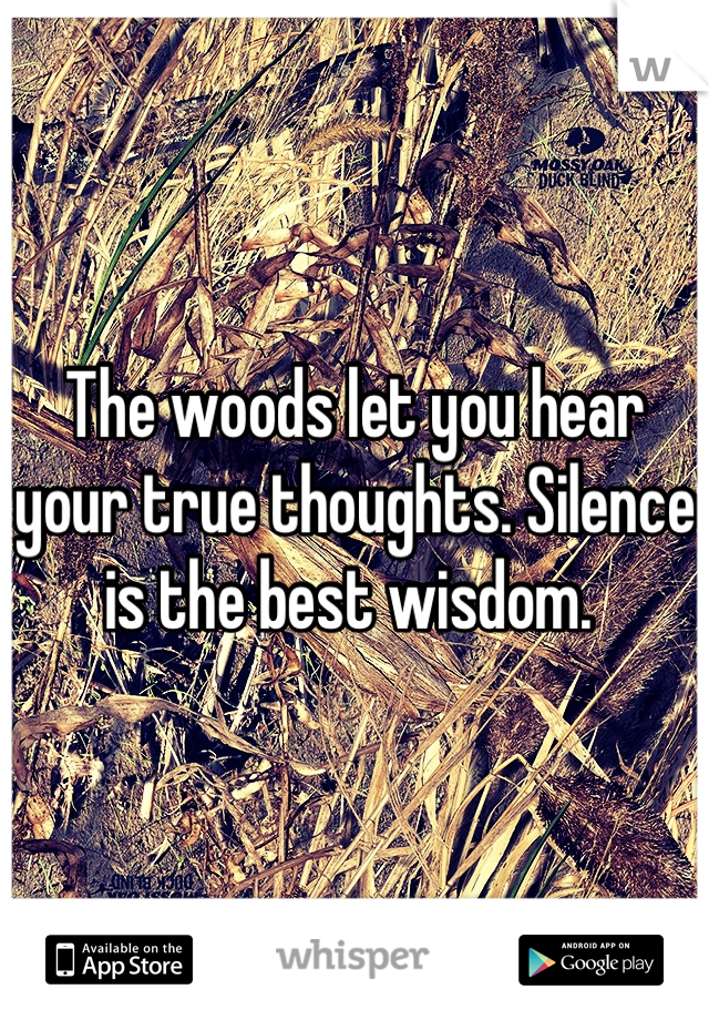 The woods let you hear your true thoughts. Silence is the best wisdom.
