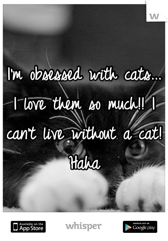 I'm obsessed with cats... I love them so much!! I can't live without a cat! Haha
