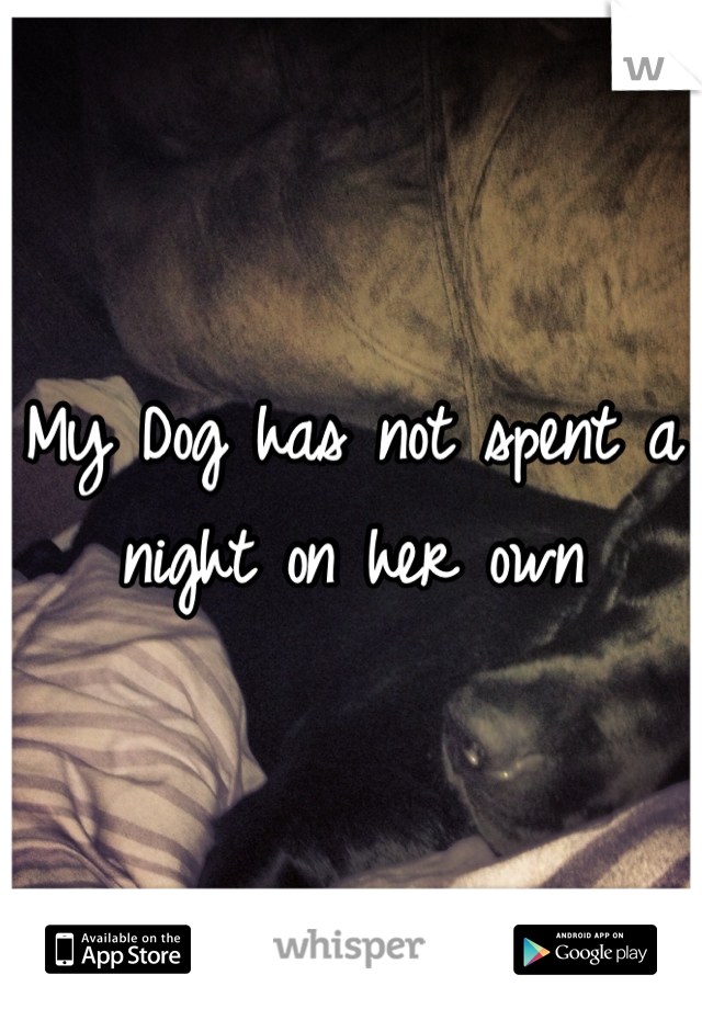 My Dog has not spent a night on her own