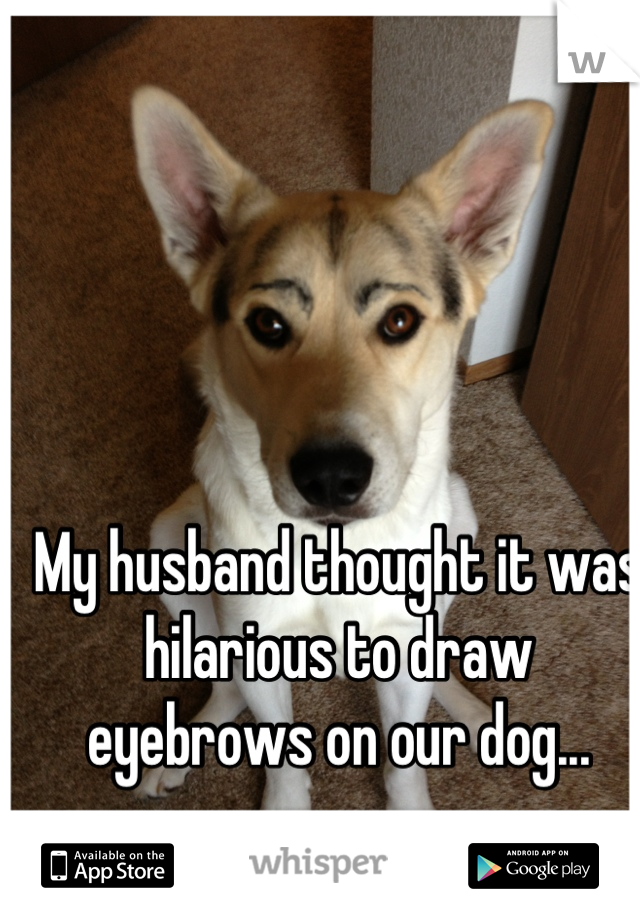 My husband thought it was hilarious to draw eyebrows on our dog...