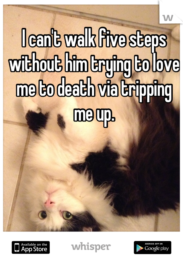 I can't walk five steps without him trying to love me to death via tripping me up.