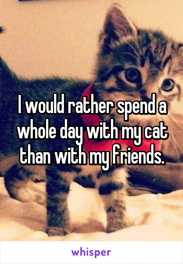 I would rather spend a whole day with my cat than with my friends.
