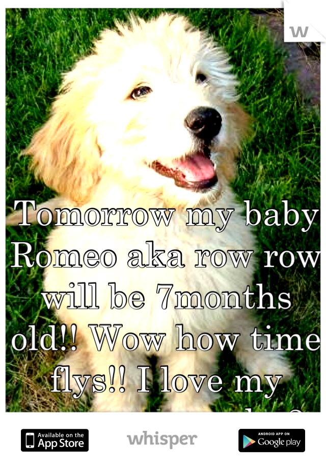 Tomorrow my baby Romeo aka row row  will be 7months old!! Wow how time flys!! I love my puppy so much<3