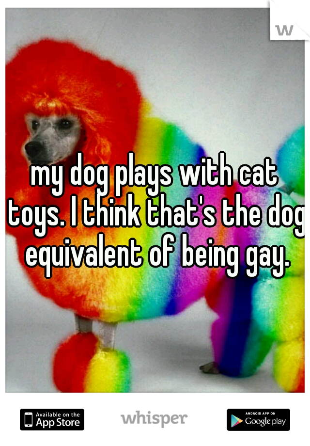 my dog plays with cat toys. I think that's the dog equivalent of being gay.