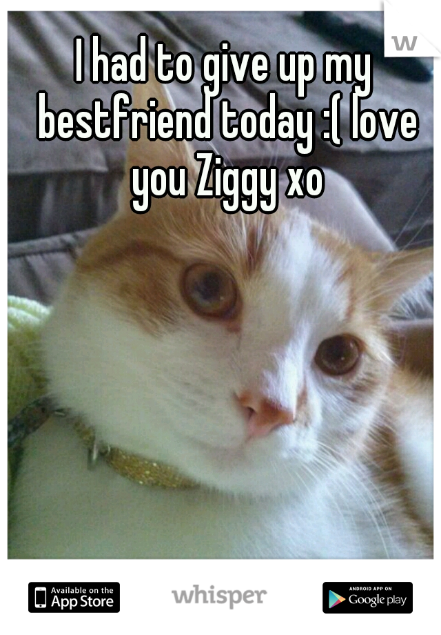 I had to give up my bestfriend today :( love you Ziggy xo