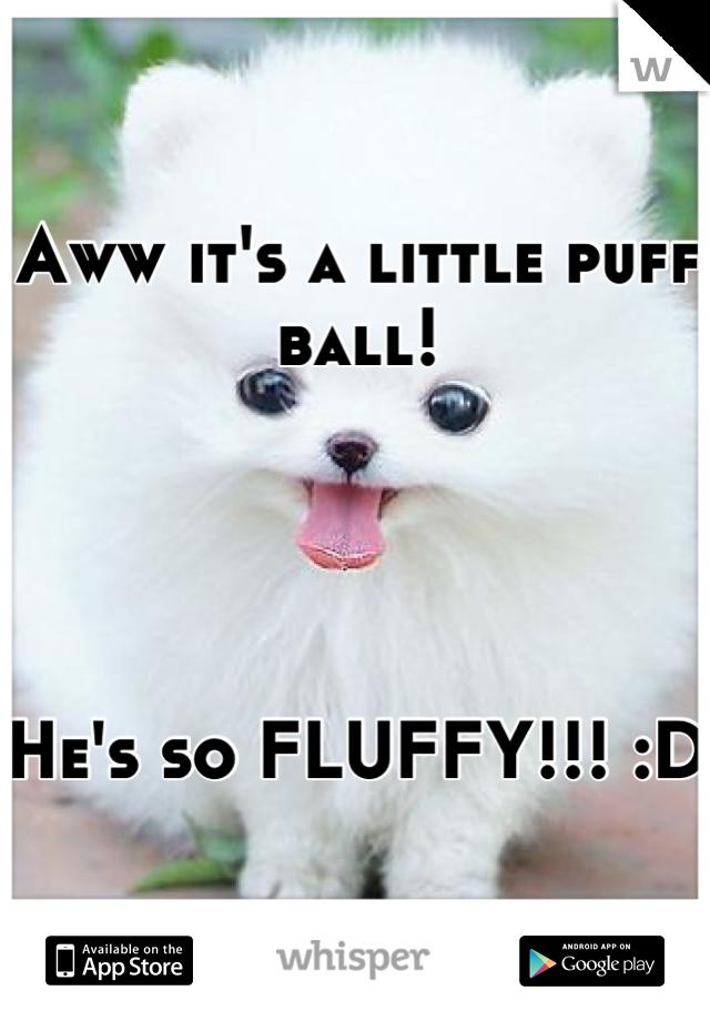 Aww it's a little puff ball!      He's so FLUFFY!!! :D