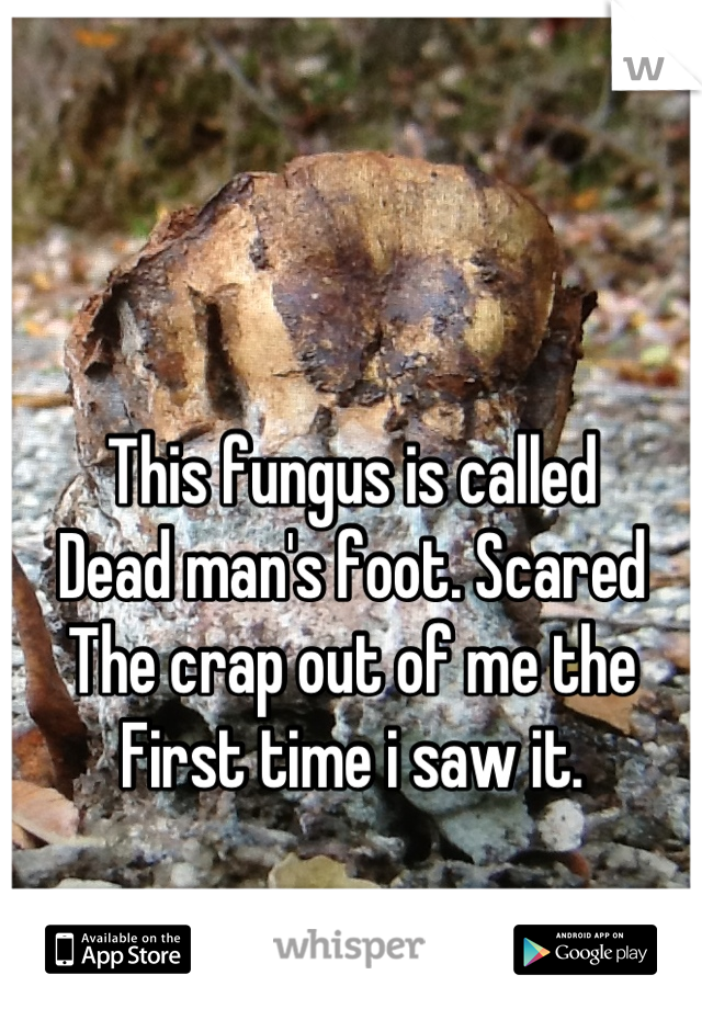 This fungus is called Dead man's foot. Scared The crap out of me the First time i saw it.
