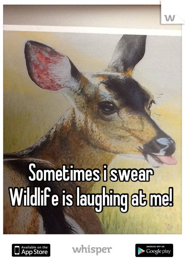Sometimes i swear Wildlife is laughing at me!