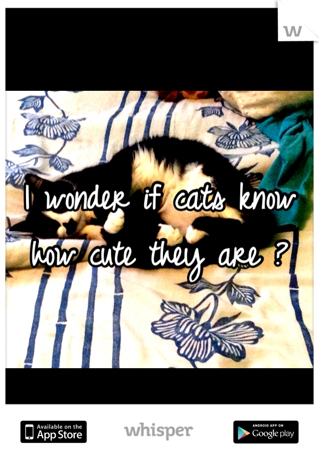 I wonder if cats know how cute they are ?