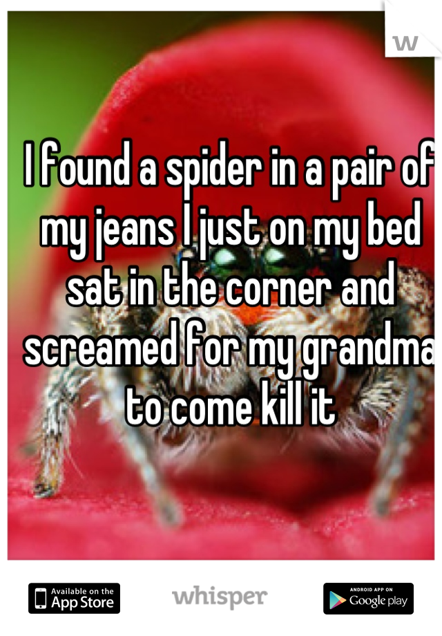 I found a spider in a pair of my jeans I just on my bed sat in the corner and screamed for my grandma to come kill it