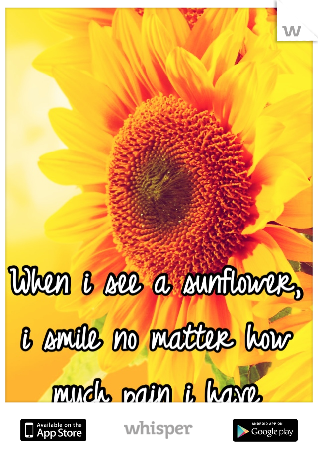 When i see a sunflower, i smile no matter how much pain i have