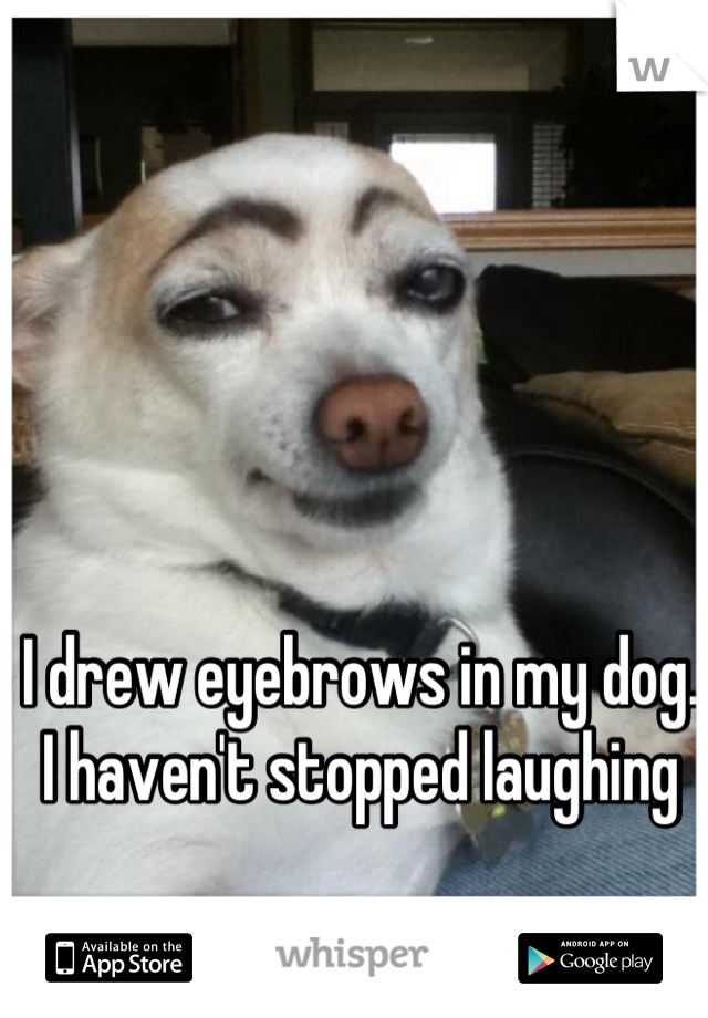 I drew eyebrows in my dog. I haven't stopped laughing