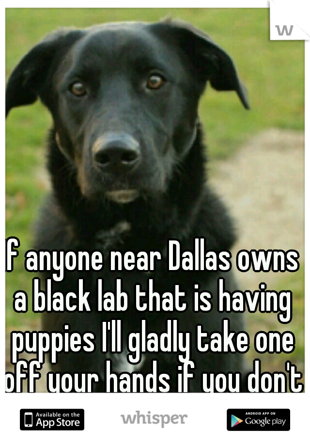 If anyone near Dallas owns a black lab that is having puppies I'll gladly take one off your hands if you don't want em!