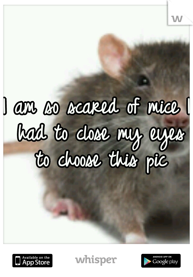 I am so scared of mice I had to close my eyes to choose this pic