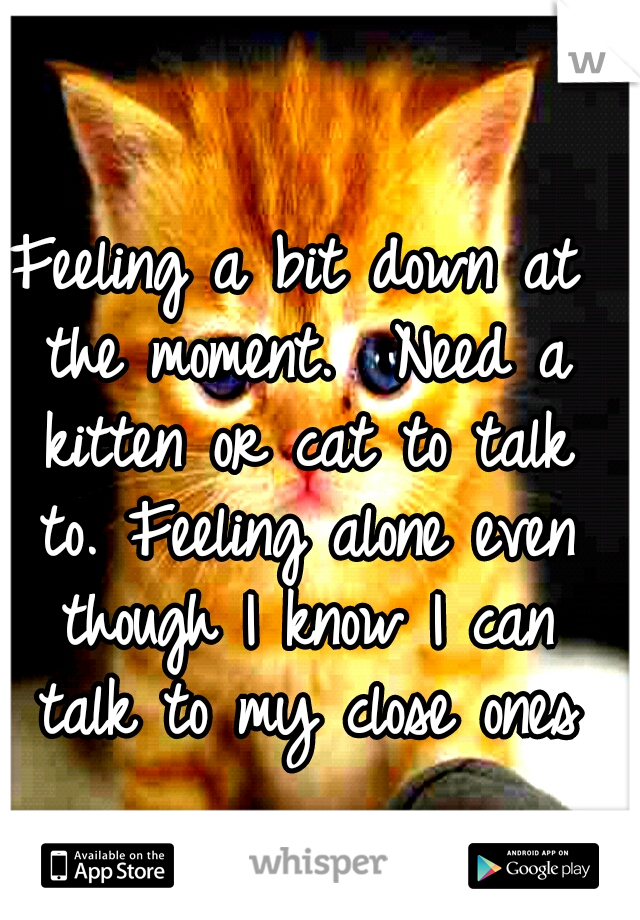 Feeling a bit down at the moment.  Need a kitten or cat to talk to. Feeling alone even though I know I can talk to my close ones