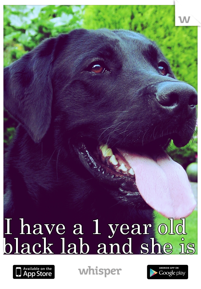 I have a 1 year old black lab and she is my best friend.