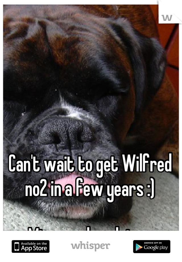 Can't wait to get Wilfred no2 in a few years :)   Miss my dog alot xx