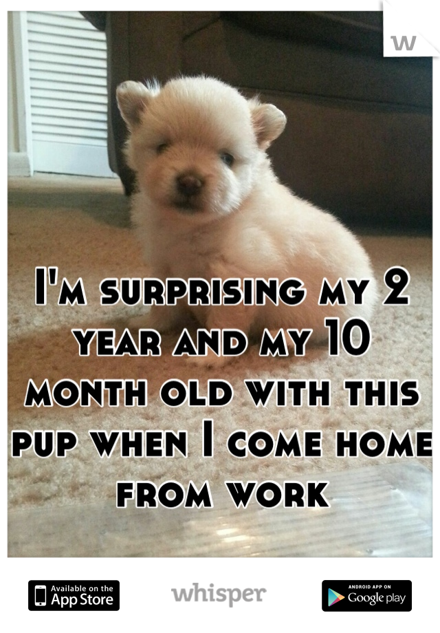 I'm surprising my 2 year and my 10 month old with this pup when I come home from work