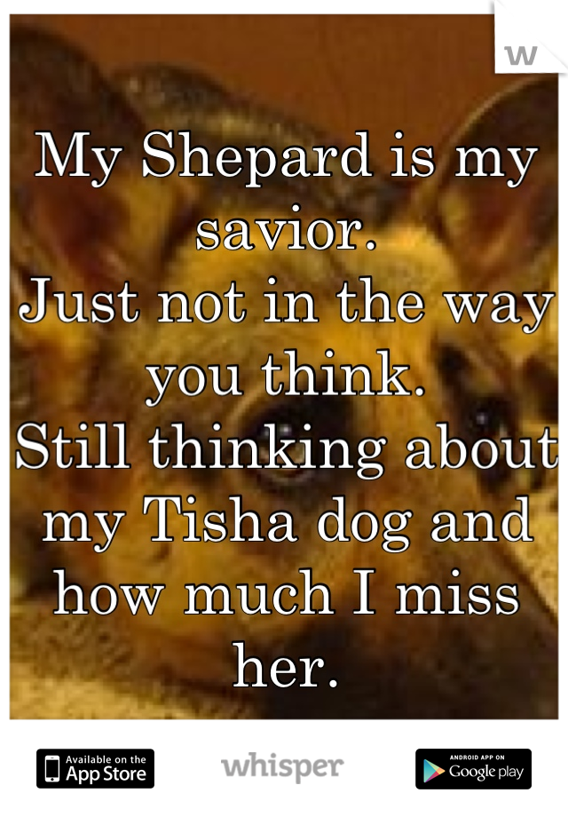My Shepard is my savior. Just not in the way you think. Still thinking about my Tisha dog and how much I miss her.