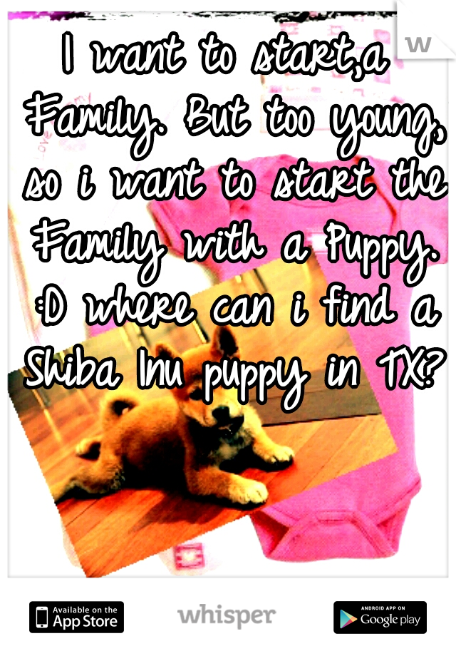I want to start,a Family. But too young, so i want to start the Family with a Puppy. :D where can i find a Shiba Inu puppy in TX??