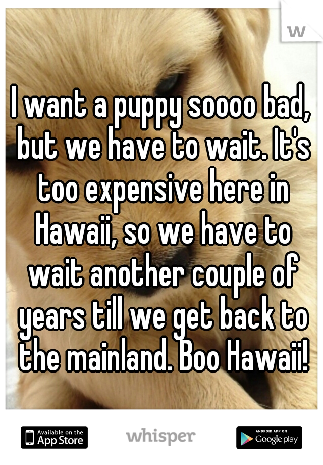 I want a puppy soooo bad, but we have to wait. It's too expensive here in Hawaii, so we have to wait another couple of years till we get back to the mainland. Boo Hawaii!