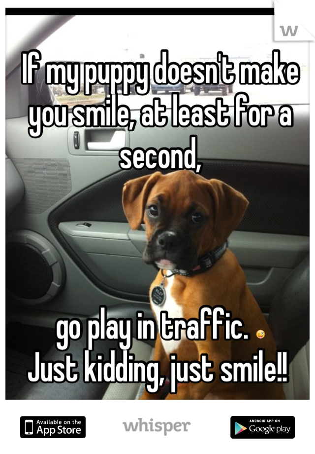 If my puppy doesn't make you smile, at least for a second,     go play in traffic. 😜 Just kidding, just smile!!